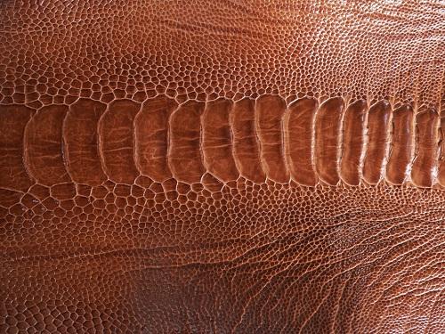 Da chân đà điểu có lớp vảy đặc trưng
